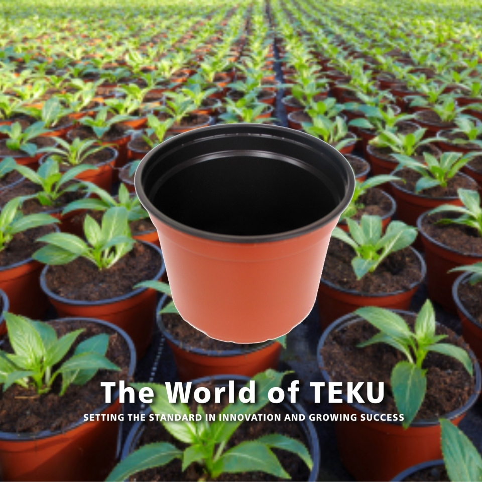 The World of Teku