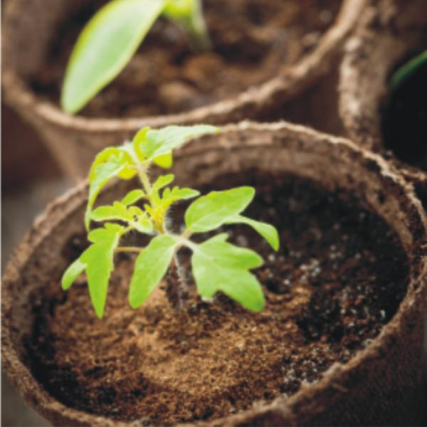 Jiffy Biodegradable Growing Container Egmont Commercial